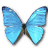 Morpho-Adonis-Huallega-Top-icon